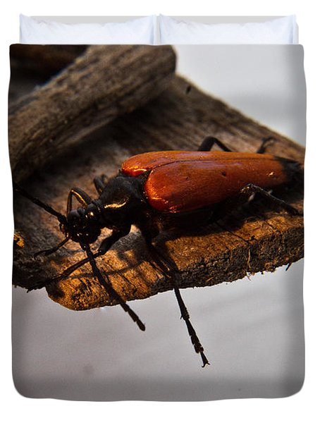 Sliding Beetle Duvet Cover