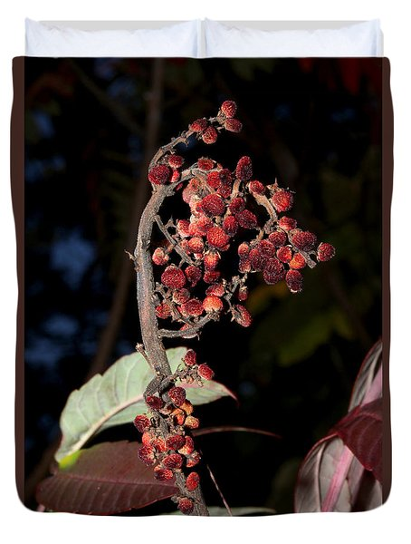 Smooth Sumac Flower Duvet Cover by Robert Morin