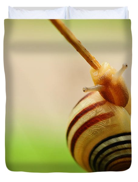 Snail  Duvet Cover by Joe  Ng