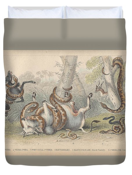 Snakes Duvet Cover by Dreyer Wildlife Print Collections