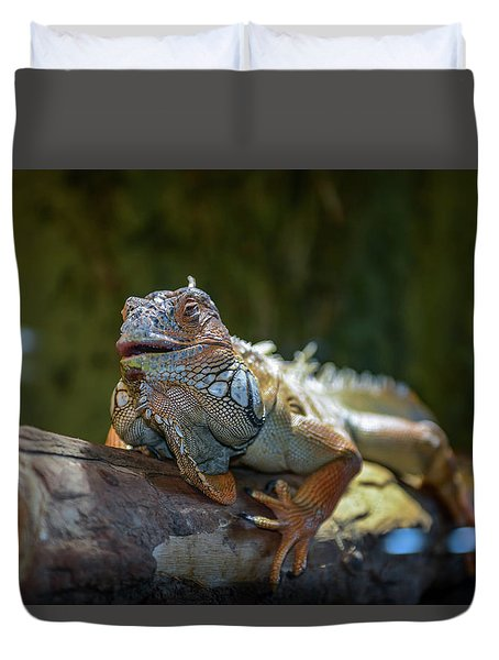 Snoozing Iguana Duvet Cover by Martina Thompson