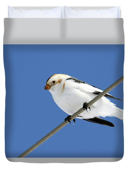 Snow Bunting Duvet Cover by Brook Burling
