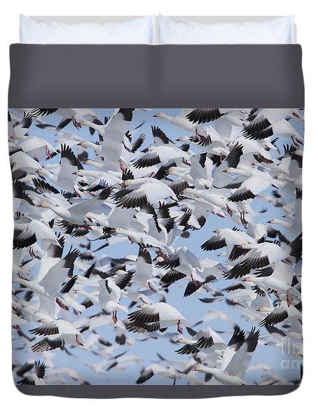 Snow Geese Duvet Cover