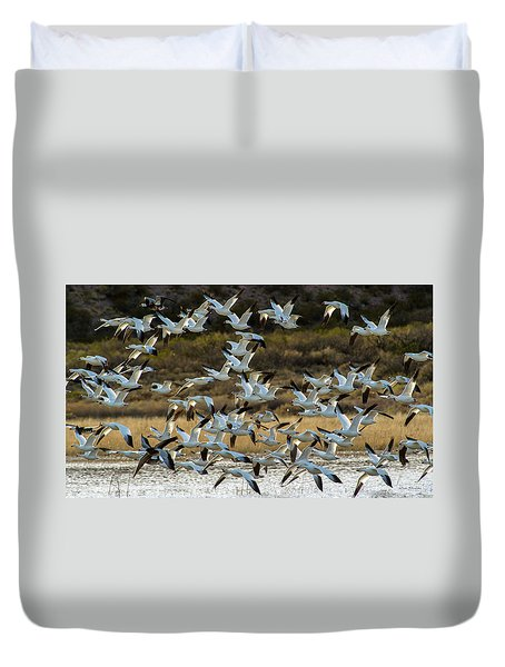 Snow Geese Flock In Flight Duvet Cover