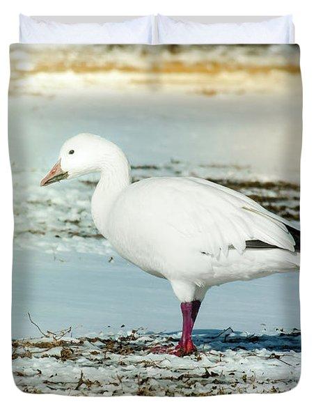 Snow Goose - Frozen Field Duvet Cover by Robert Frederick