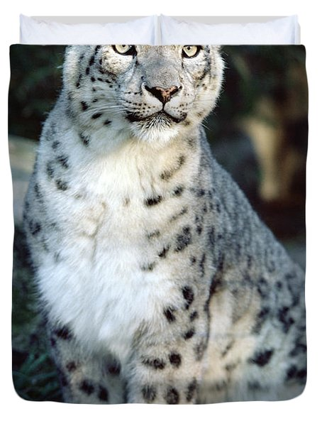 Duvet Cover featuring the photograph Snow Leopard Uncia Uncia Portrait by Gerry Ellis