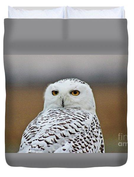 Snow Owl Strare Duvet Cover