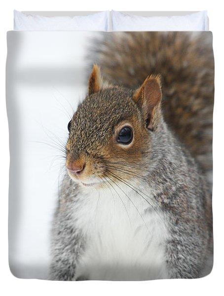 Snow Squirrel Duvet Cover by Karol Livote
