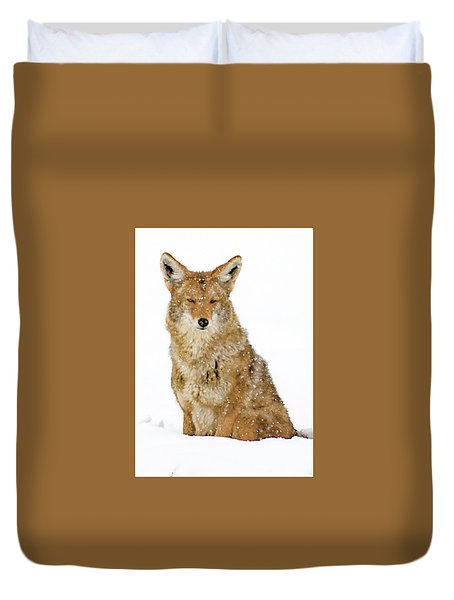 Snowy Coyote Duvet Cover