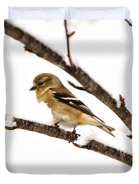 Snowy Day Goldfinch Duvet Cover