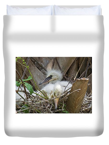 Snowy Egret Chick Family Duvet Cover by Kenneth Albin