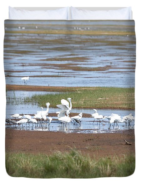 Snowy Egret Group Duvet Cover