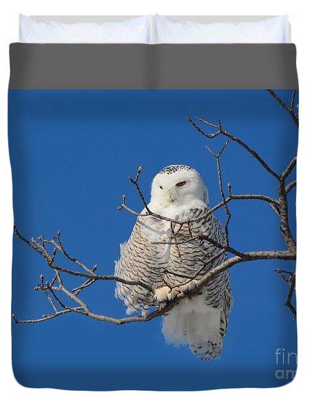 Snowy Owl 7 Duvet Cover