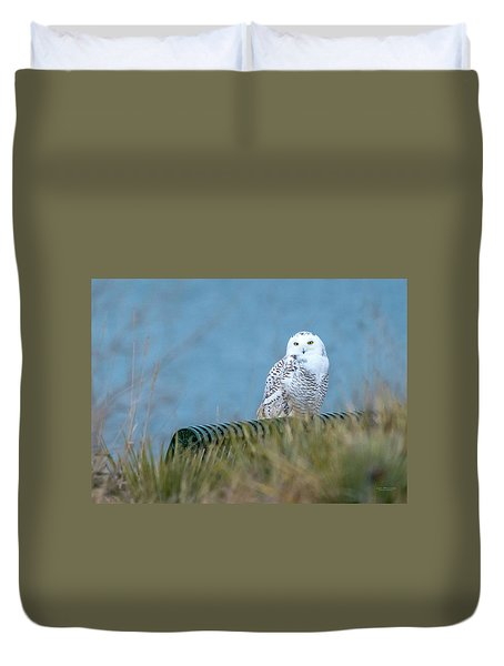 Snowy Owl On A Park Bench Duvet Cover