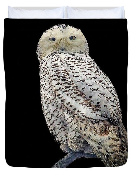 Snowy Owl On Black Duvet Cover by Constantine Gregory