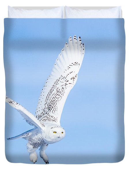 Snowy Owls Soaring Duvet Cover