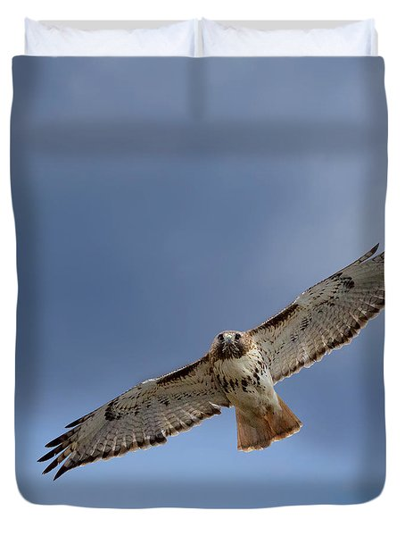 Soaring Red Tail Square Duvet Cover by Bill Wakeley