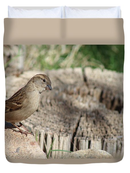 Song Sparrow Looks Curious Duvet Cover