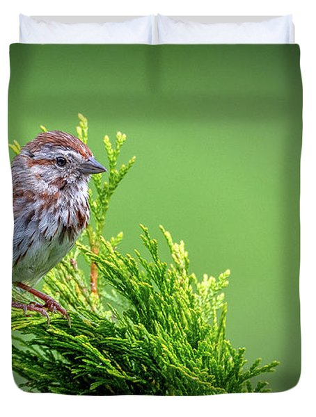 Song Sparrow Perched - Melospiza Melodia Duvet Cover