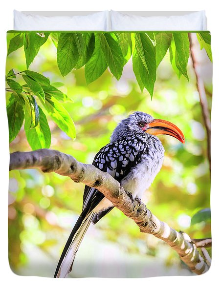 Southern Yellow Billed Hornbill Duvet Cover by Alexey Stiop