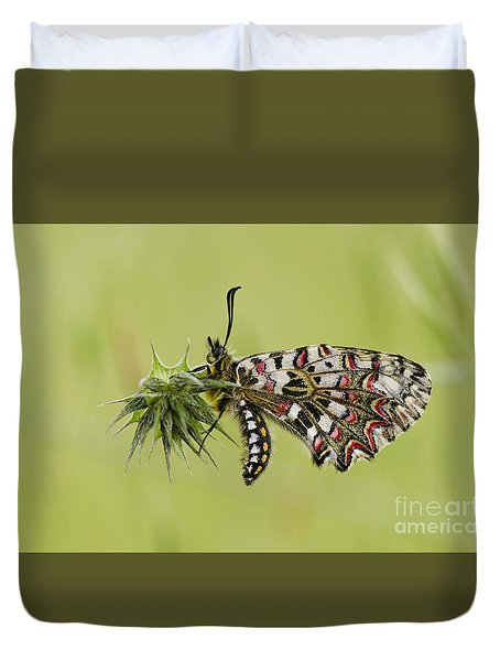 Spanish Festoon Butterfly Duvet Cover