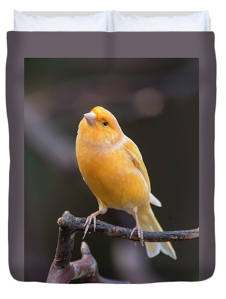 Spanish Timbrado Canary Duvet Cover