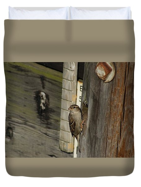 Sparrow In Pier Townhouse Duvet Cover