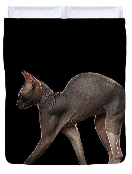 Sphynx Cat Funny Standing Isolated On Black Mirror Duvet Cover