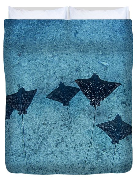 Spotted Eagle Rays Duvet Cover by Dave Fleetham - Printscapes