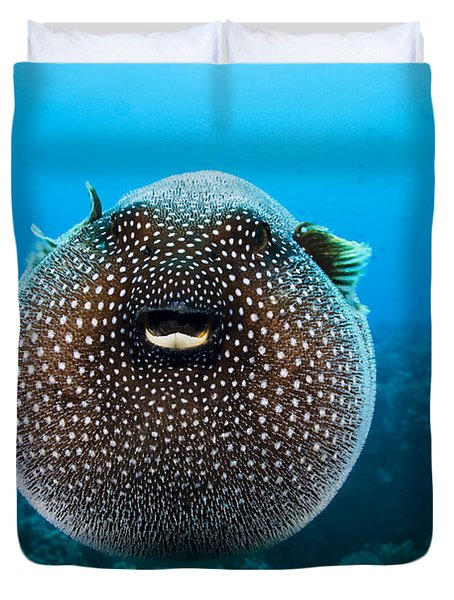 Spotted Pufferfish Duvet Cover by Dave Fleetham - Printscapes