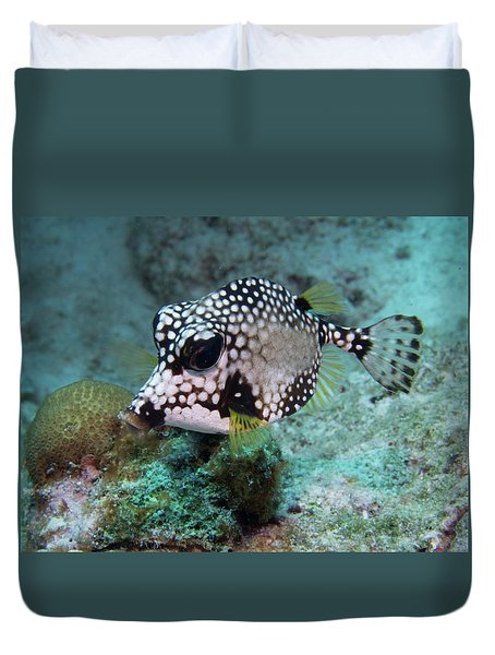 Duvet Cover featuring the photograph Spotted Trunkfsh by Jean Noren