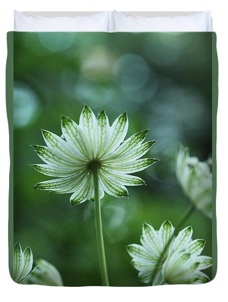 Botanica .. Spray Of Light Duvet Cover by Connie Handscomb