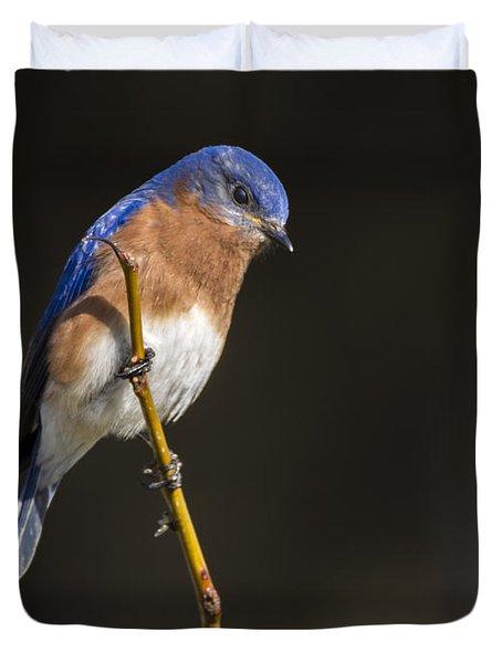 Spring Bluebird Duvet Cover