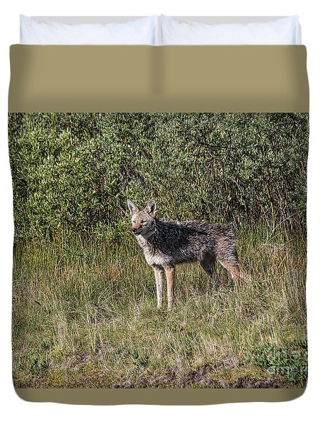 Duvet Cover featuring the photograph Spring Coyote by Mitch Shindelbower