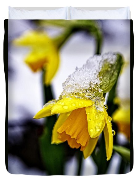 Spring Daffodil Flowers In Snow Duvet Cover
