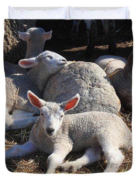 Spring Lambs Duvet Cover