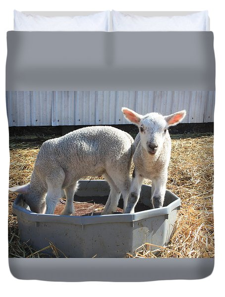 Spring Lambs Playing Duvet Cover