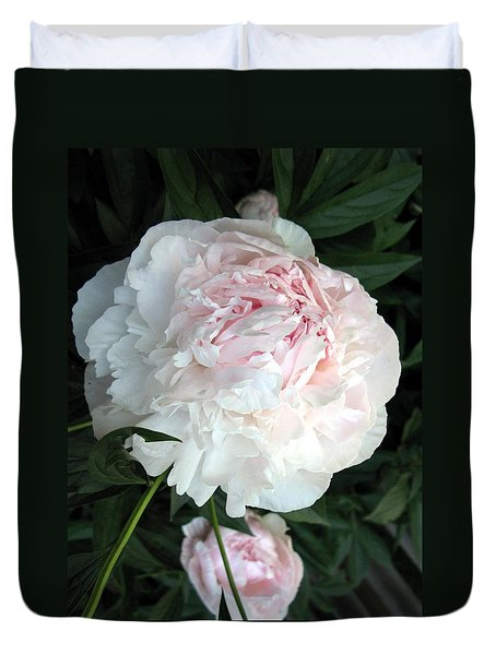 Springs Peony Duvet Cover by Carol Sweetwood