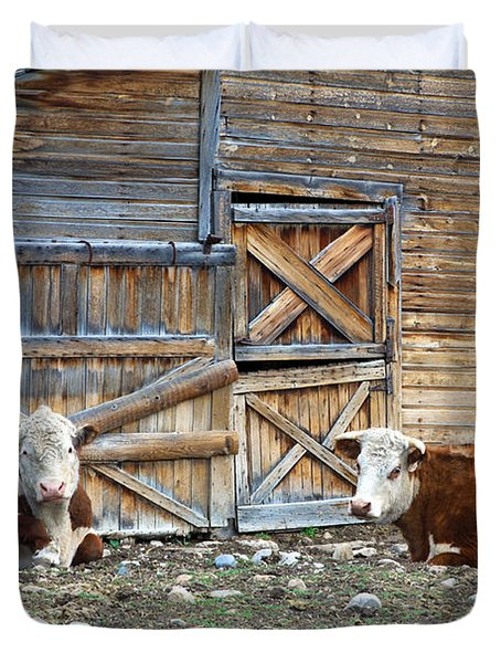 Squires Herefords By The Rustic Barn Duvet Cover