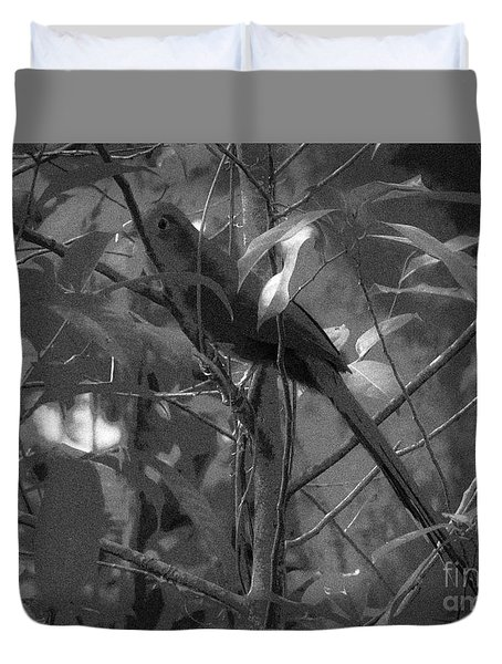 Squirrel Cuckoo  Duvet Cover