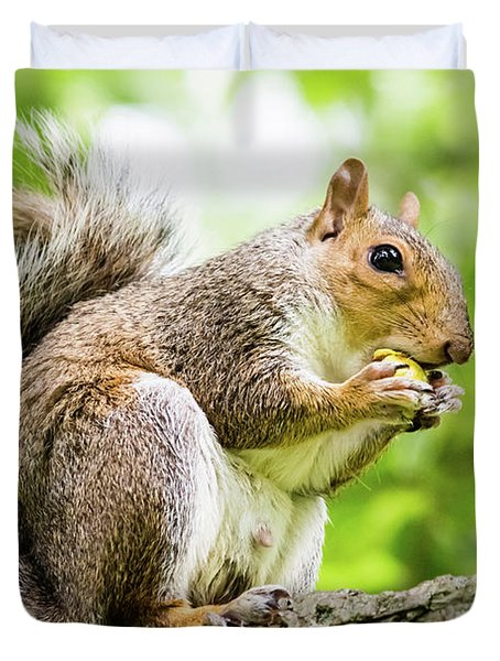 Squirrel Eating On A Branch Duvet Cover