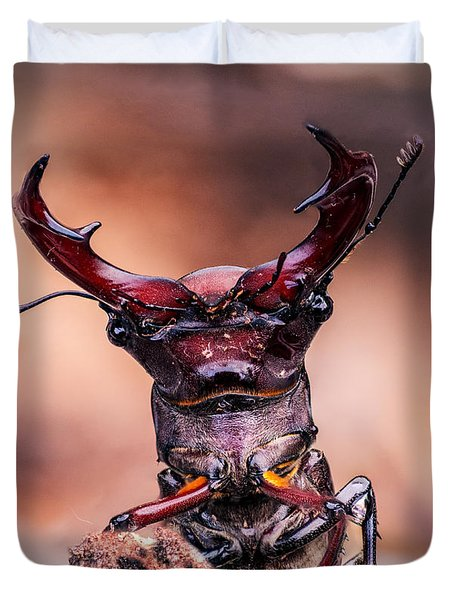 Stag Beetle Stare Down Duvet Cover
