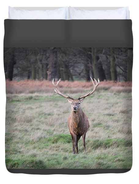 Stag In Richmond Park Duvet Cover
