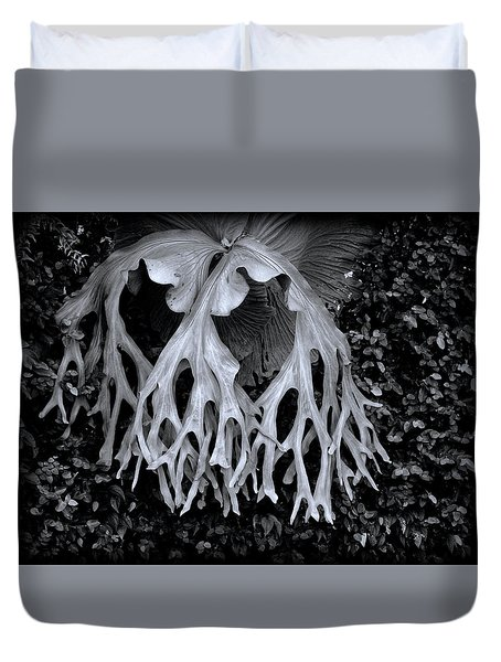 Duvet Cover featuring the photograph Staghorn Fern by Wayne Sherriff