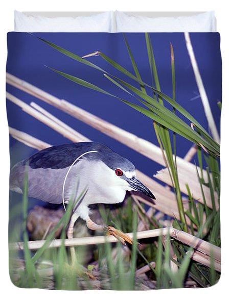 Stalking Black Crowned Night Heron Duvet Cover