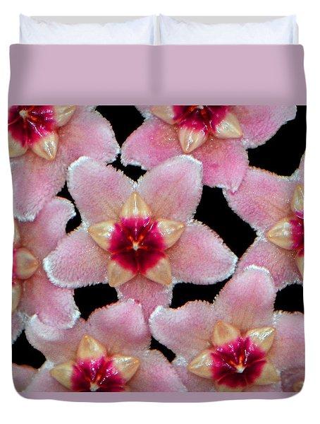 Stapelia Hirsuta - Starfish Flower 002 Duvet Cover by George Bostian