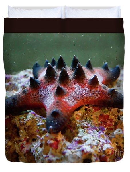 Star Fish 2 Duvet Cover