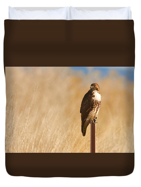 Stare Of A Red-tailed Hawk Duvet Cover