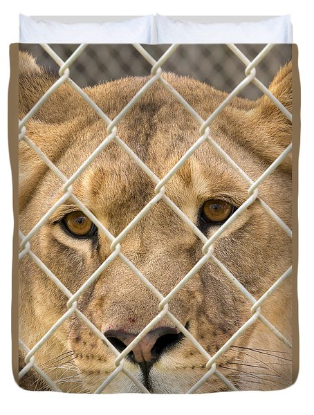 Staring Lioness Duvet Cover