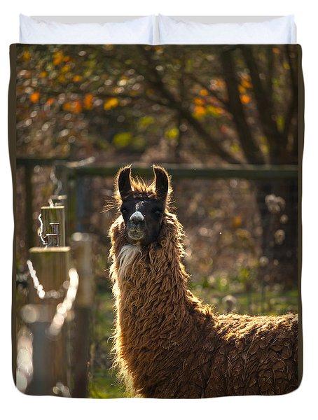 Staring Llama Duvet Cover